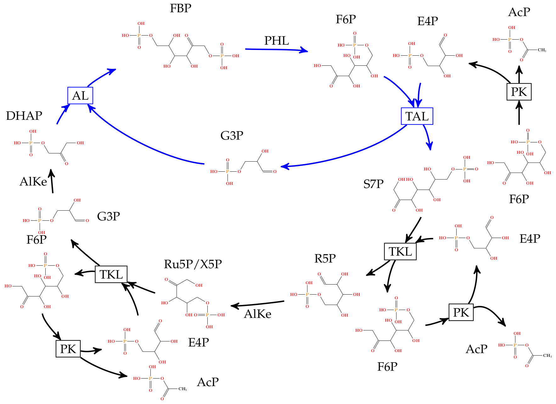 An automatically inferred pathway alternative to glycolysis.